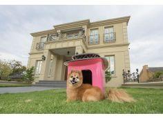 Design: komfortowy dom dla zwierząt