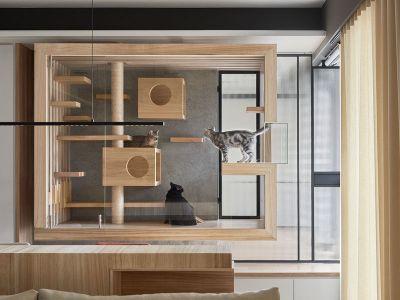 Designerska przestrzeń dla kota